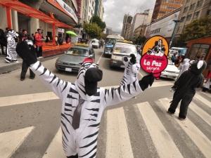 Dancing Zebra Directing Traffic